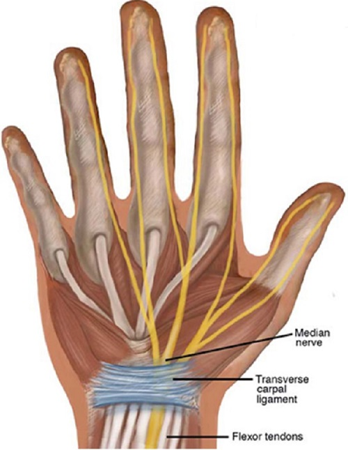 Carpel-Tunnel-IMage_Resized_500_664.jpg