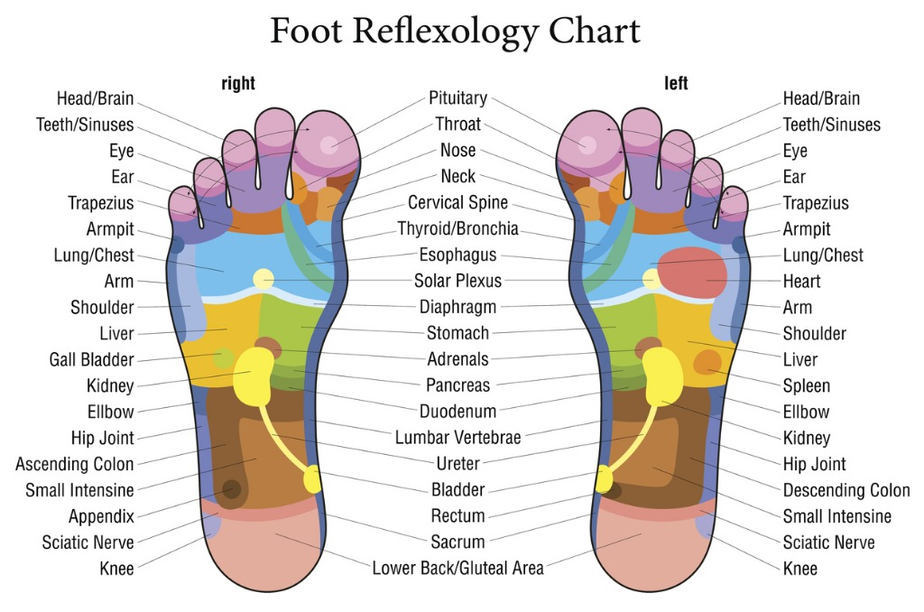 foot-reflexology-chart-description-vector-id494563867.jpg